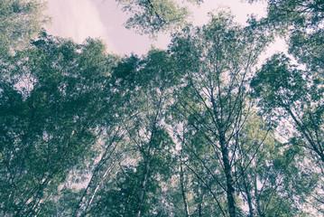 Green trees in summer park retro