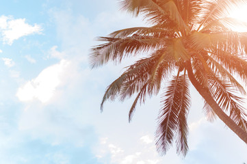 Palm trees and sky in the bright tropical sun