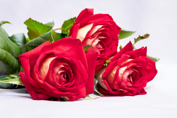Bouquet of red roses to greet the newlyweds on the wedding day. A gift for a lovely girl_