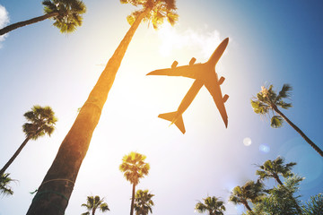 Low angle view of a plane flying in the sky surrounded by palm trees