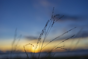 Grass on sunset