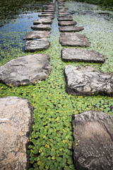 Beautiful Stepping Stones in ponds