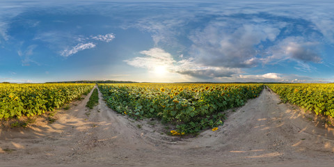 full seamless spherical panorama 360 by 180 degrees angle view on gravel road among sunflowers fields in sunny summer evening in equirectangular projection, skybox VR AR virtual reality content