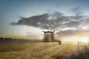 Mähdrescher bei der Ernte auf dem Getreidefeld