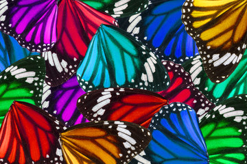 Beautiful butterfly wings for background