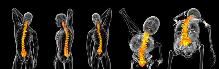 3d rendering of vertebrae