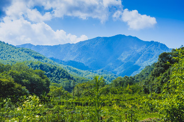 Mountains and forest scenery in summer