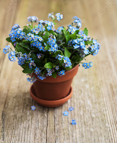 Forget Me Not Flowers In Small Flower Pot