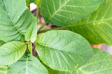 Green fresh plant leaves closeup, top view