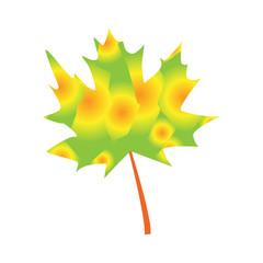 Autumn maple leaf. Vector illustration