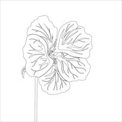 Nasturtium wild flower. Black Line drawing isolated on white background. Vector floral illustration.