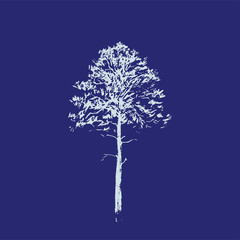 Pine tree. Line drawing Isolated on blue Background. Hand drawn sketch. Vector illustration.
