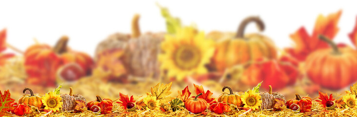 thanksgiving background autumn leaves