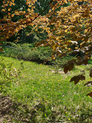 Cozy green glade in the shade of trees with leaves of shaded color