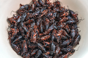 Close-up shot of a flock of cricket fried, Thai delicious street food in a white bowl background.
