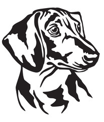Decorative portrait of Dog Dachshund vector illustration