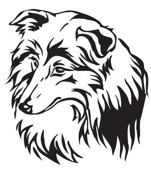 Decorative portrait of Dog Sheltie vector illustration