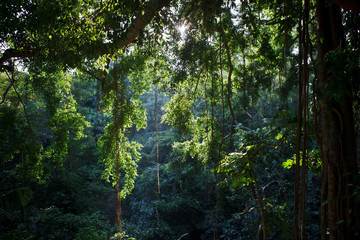 old jungle forest