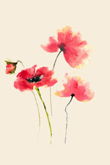 Red poppy flowers, watercolor hand painted