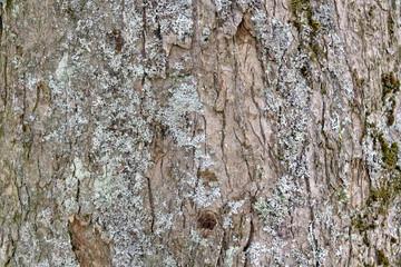 tree bark wood texture