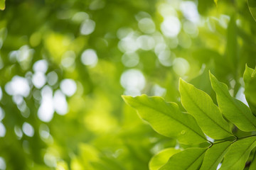 abstract,bokeh leaf pattern nature green background.