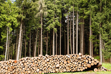 Tronchi di legna accatastati
