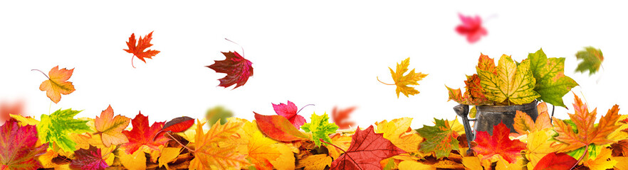 autumn leaves background tendril