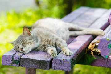 Grey cat sleeping on wooden bench close-up