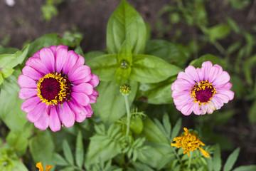 flowers in home garden