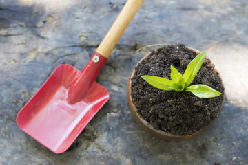 plant in the flowerpot and gardening tools