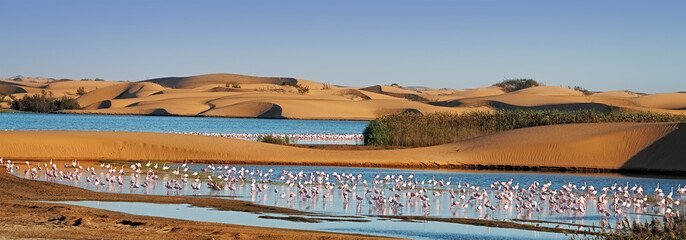 Flock of flamingos in a lagoon on Pelican Point, Walvis Bay, Namibia