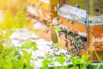 Bienenhaus im  Blumenfeld