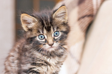 Portrait of a small kitten in the room on a blurry background_