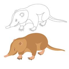 cuban solenodon animal vector illustration flat style