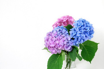 beautiful bouquet of pink and blue hydrangea flowers. holiday or wedding background with copy space