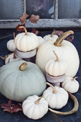 Thanksgiving or Halloween autumn decorations with heirloom mini white and grey pumpkins and deer antlers against a rustic autumn background.