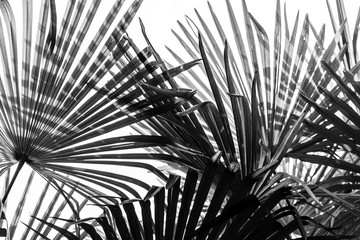 palm tree leaves background