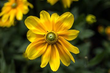 Yellow flower on dark green