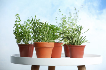 Pots with fresh rosemary on table against color background