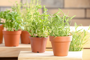 Pots with fresh rosemary on table against blurred background