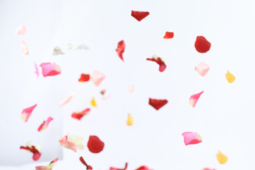 blurred image of pink petals on white background.photo with place for text