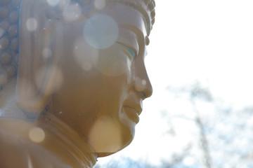 Foto auf AluDibond Buddha Close-up buddha's head outdoors with sun reflections
