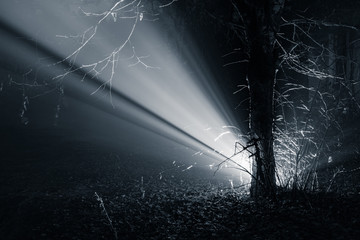Light Ray In The Forest