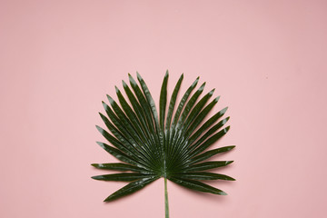 a green leave underneath a pink background