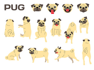 pug,dog in action,happy dog