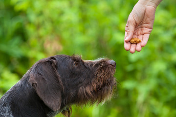 hand with treat training dog