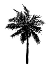 Single palm tree silhouette. Vector illustration