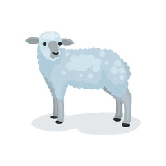 Flat vector icon of cute gray lamb. Small domestic sheep. Biblical and Christian sacrificial animal. Religious symbol