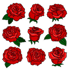 Set of gorgeous red roses. Bud of gorgeous garden flowers. Old-school floral tattoo. Vector design for postcard, t-shirt print or invitation