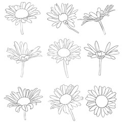 vector set of drawing daisy flowers